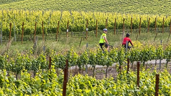 wine-country-cycling-02