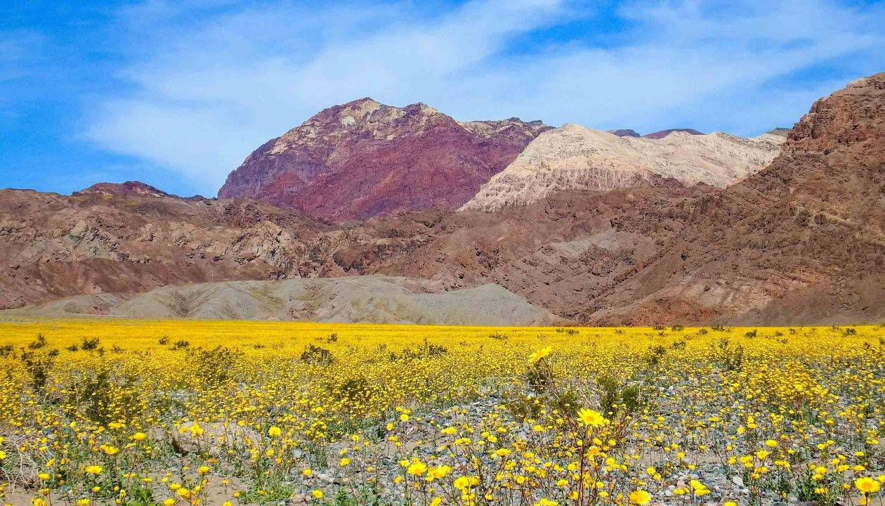 valley-fire-death-valley-tour-flowers-12